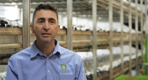 Nick Femia, Managing Director of SA Mushrooms